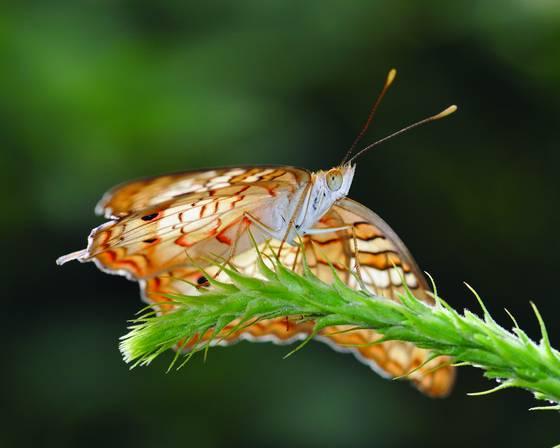 Butterfly 9879