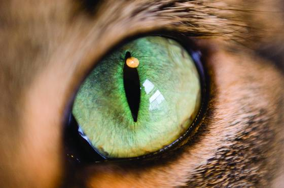 Earl s eye