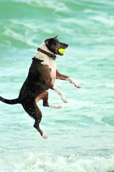 Dog beach 5