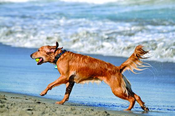 Dog beach 9