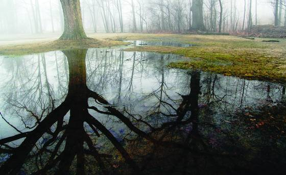 Springs puddles