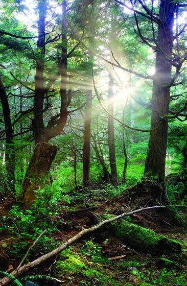 Epiphany of light