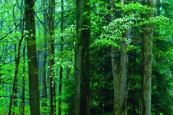 Spring woods