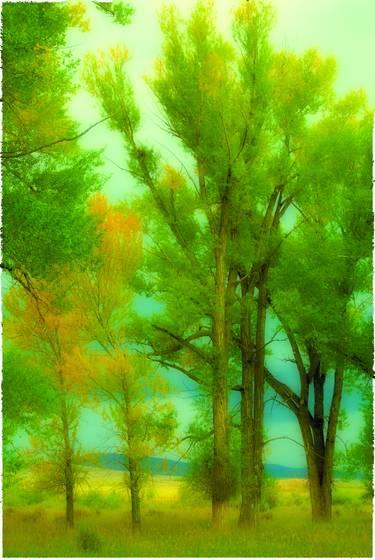 Cottonwood polaroid