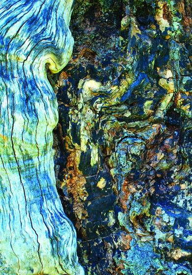 Old wood 2