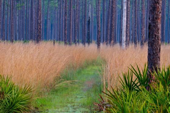 Ochlockonee grass
