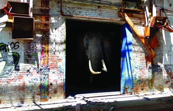 Farsafari series   elephant house