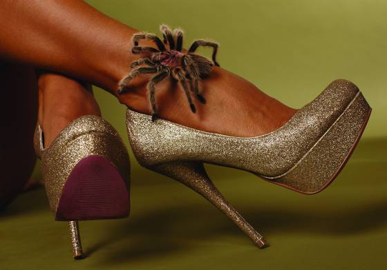 Ashley s shoes