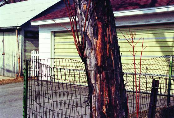 Barky tree wire garage