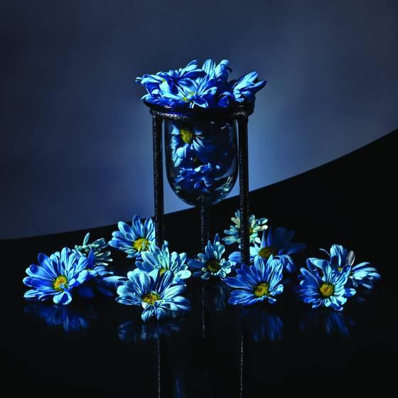 Holland daisies