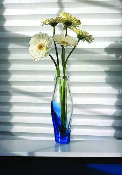 White gerber daisies