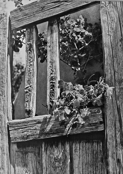Flowers on door