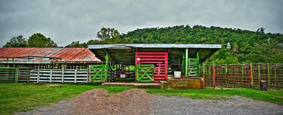 Cattleman s livestock market