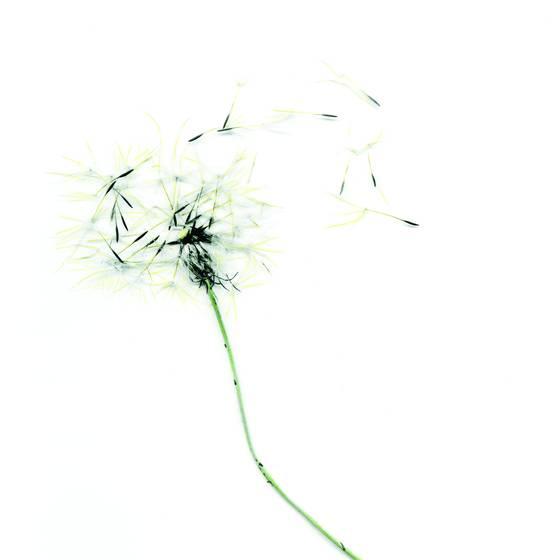Make a wish 4
