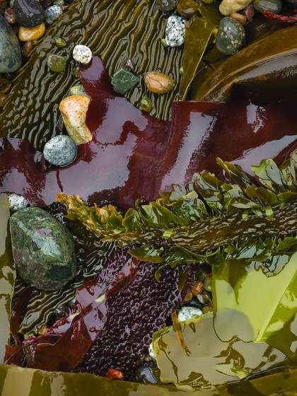 Kelp and scattered pebbles