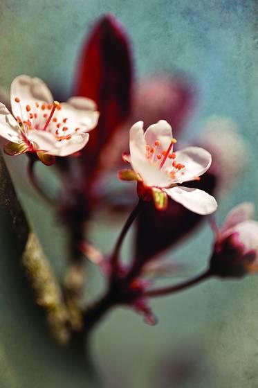 Botanical studies 2
