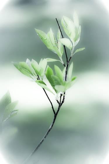 Botanical studies 9