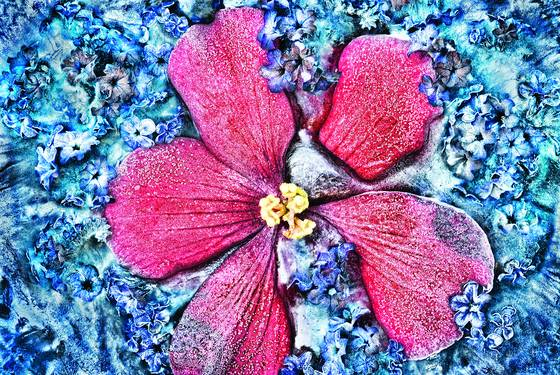 Summer frost begonia