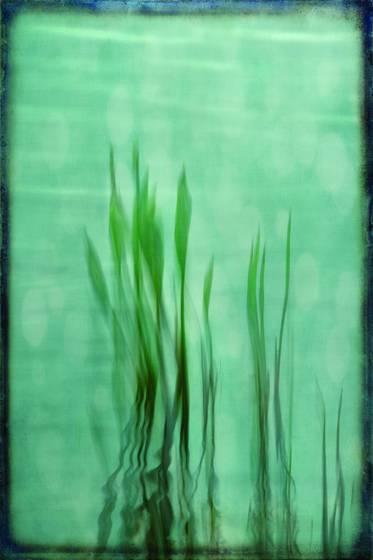 Soft reeds