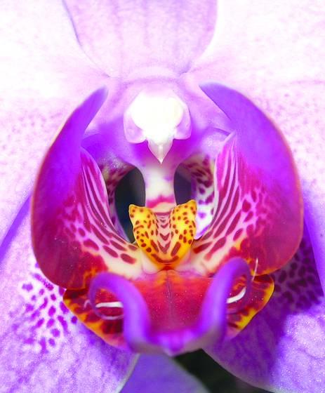 The flower 1