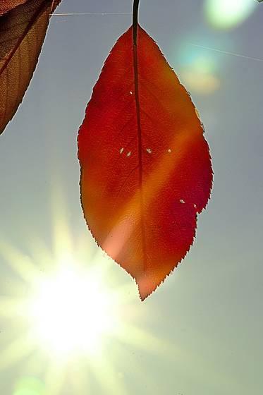 Lens flare leaf