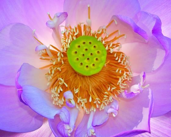 Lotus 2749
