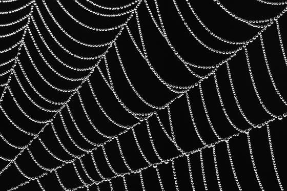 Web pearls