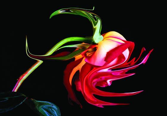 Gypsy rose   001