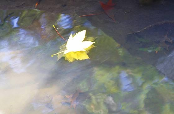 An autumn journey 5