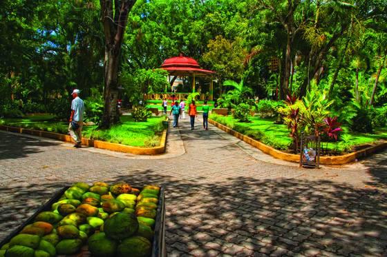 Mango fruits in duarte s park