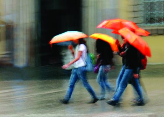 Four umbrella  walkers