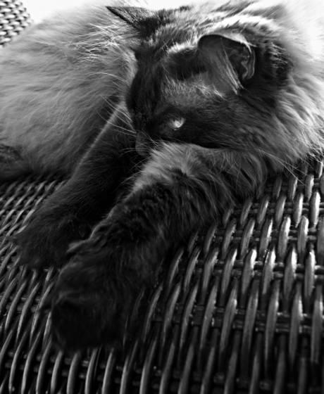 Pasha the cat