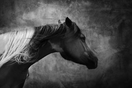 Badlands horse  2