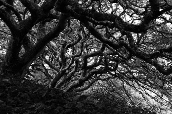 Tangled trees 1