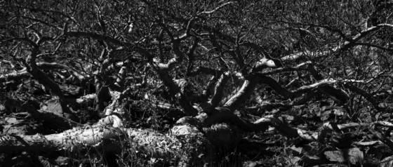 Tangled trees 2