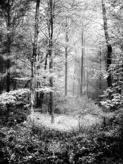 Forest glow i