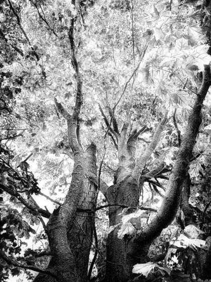 Forest glow ii