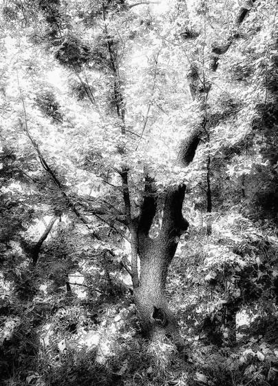 Forest glow iii