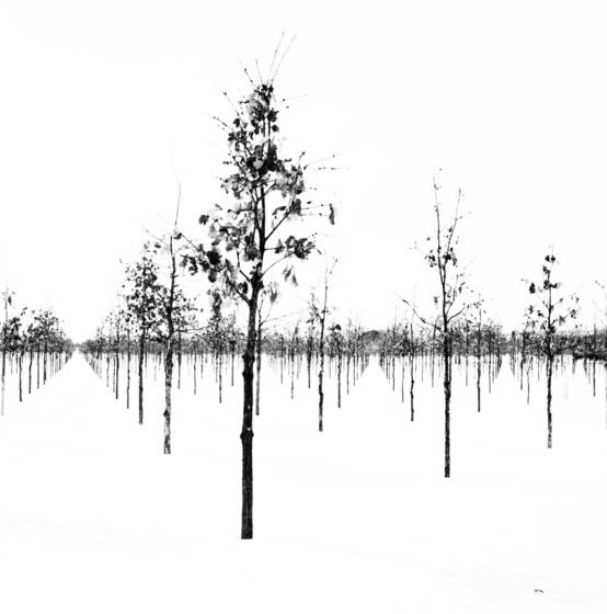 Oak prairie nursery 1