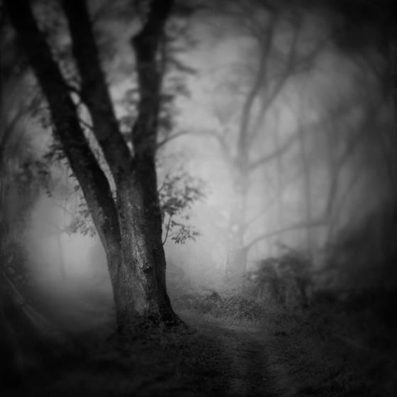 Road to morpheus