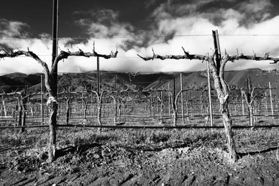 February vineyard