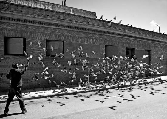 Man scaring pigeons