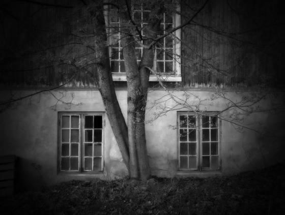 Three trees and windows
