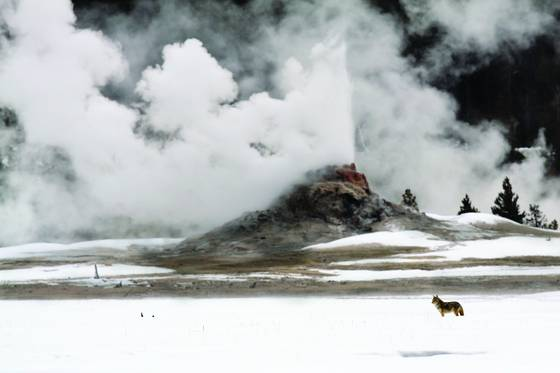 Coyote geyser