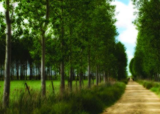 Camino de santiago 1