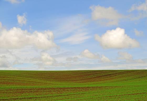 Idaho field
