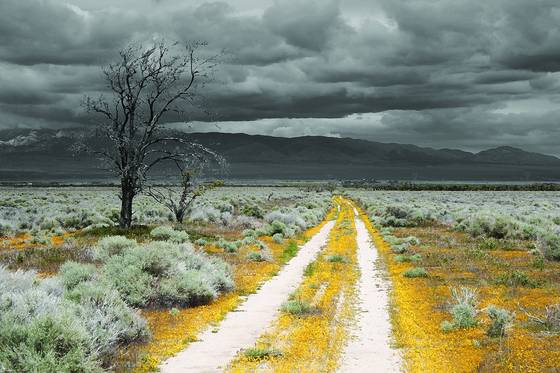 Yellow road