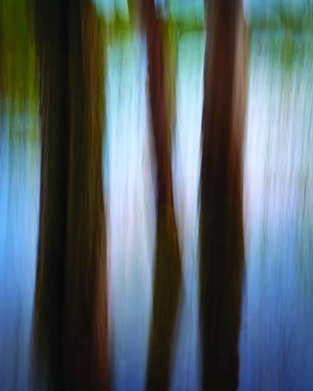 Slurred trees on the slough