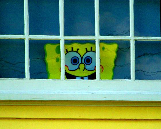 Window sponge