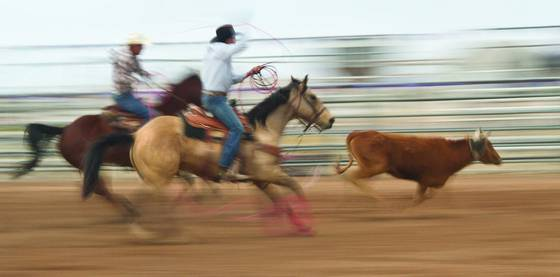 Rodeo impressions  2